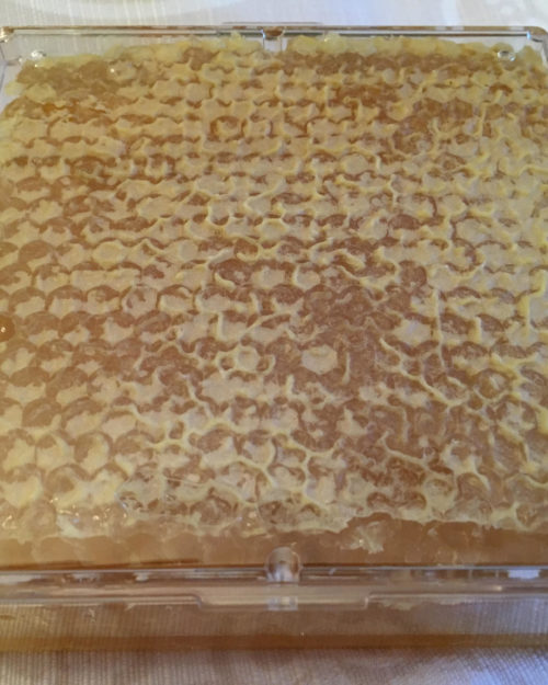 Brighton Honey Comb